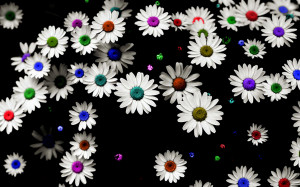Colorful Daisy 15507 Hd Wallpapers