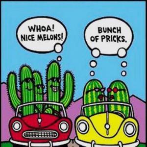 Funny cartoons - Cactus shouting at a per of melons