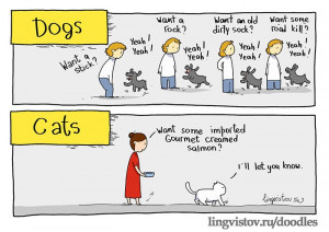 The differences between cats and dogs
