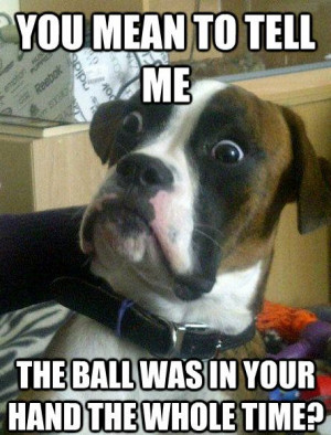 Shocked Dog Meme Shows a Pup In a State of Perpetual Surprise