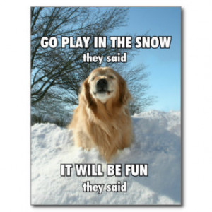 Funny Golden Retriever Go Play in the Snow Meme Postcard