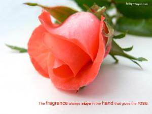 beautiful flower for romantic couple flower frame romantic love flower