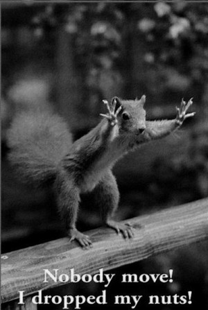 Funny animals.. 25 Best Funny animal Quotes and Funny Memes
