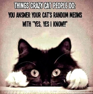 funny-cat-pictures-things-crazy-cat-people-do