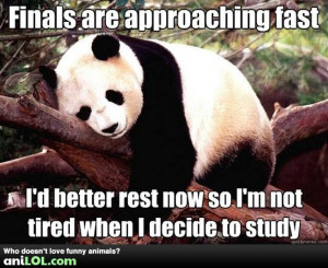 why study for finals when you can sleep instead?