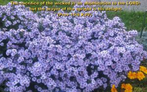 Inspirational Wallpapers Bible Verses Flowers Iii New