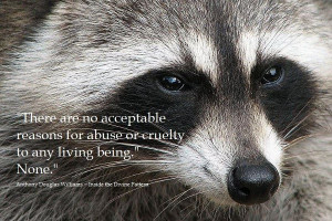 There are no acceptable reasons for abuse or cruelty to any living ...