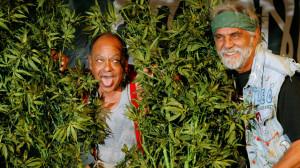CHEECH AND CHONG comedy humor marijuana weed 420 r wallpaper ...