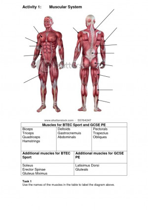 pain assessment body diagram blank muscular body diagram blank