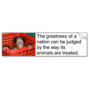 inspirational animal rescue quotes