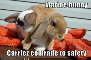 cats : funny-pictures-marine-bunny