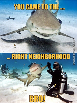 funny picture you came to the right neighbourhood bro