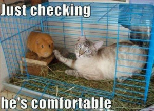 Funny cat in guinea pig cage