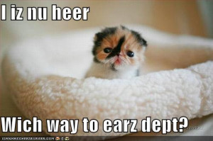 funny-pictures-kitten-needs-ears