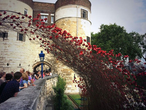 ... Blood From The Tower of London To Remember The Fallen Soldiers of WWI
