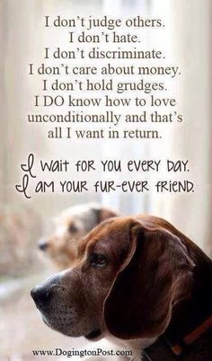 Pet Quotes and Sayings