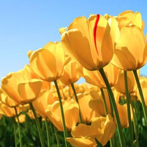 Frasi sui fiori