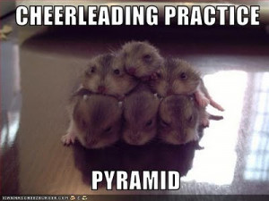 funny animal pictures with captions funny animal pictures with sayings ...