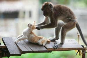 la-scimmia-e-il-gatto.jpg