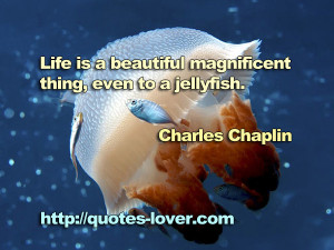 Life is a beautiful magnificent thing, even to a jellyfish.