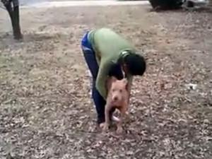 dog abuse junvenile