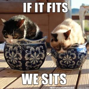 Grumpy Cat vs. Pokey For more #GrumpyCatMeme visit www.pinterest.com ...