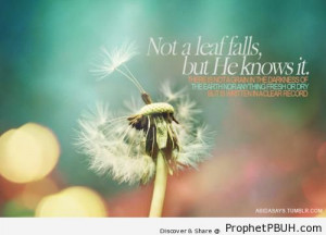 Not a leaf falls but& - Islamic Quotes About Allah's Omniscience (God ...