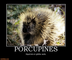 Tags Animals Porcupines Military Sniper Ghillie