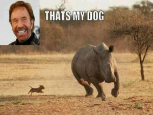 Why don't you also check this Chuck Norris funny joke .