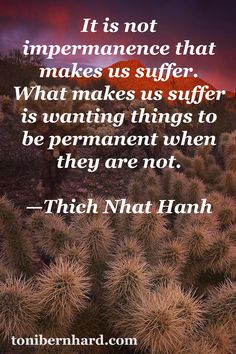 Thich Nhat Hanh understands that contentment is to be found by making ...
