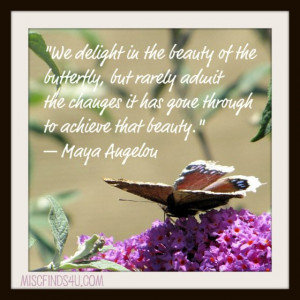 Today's Quote: Maya Angelou Delight in the Beauty of the Butterfly