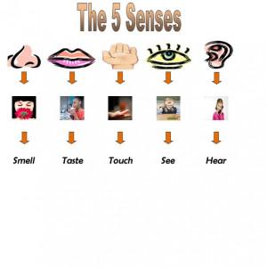 five sense organs