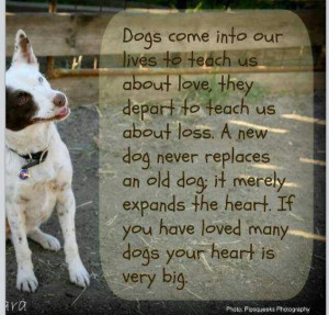 This is very true. I have learned so much from having my dogs in my ...