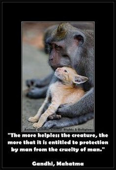 Animal Quotes, Animal Rights & Religions's photo: More