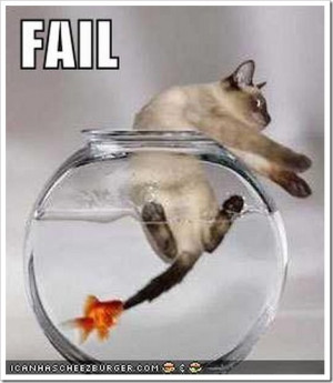 Funny kitty pics images photo scraps for orkut
