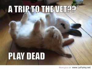funny animals, funny jokes, funny pics, funny pictures, funny quotes ...