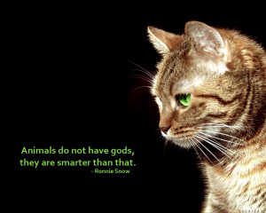 Tags: animals cat god quote
