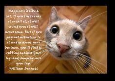 cat # quote more cat lovin animal quotes kat cat cute cat quotes ...