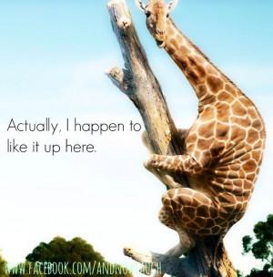 Funny Giraffe via www.Facebook.com/AndNowLaugh
