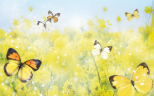 butterfly, background, ground, back, wallpaper, wallpapers