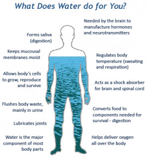 The water in you