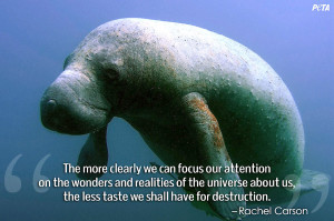 Quotes About Animals in Captivity That Could Change The Way You ...