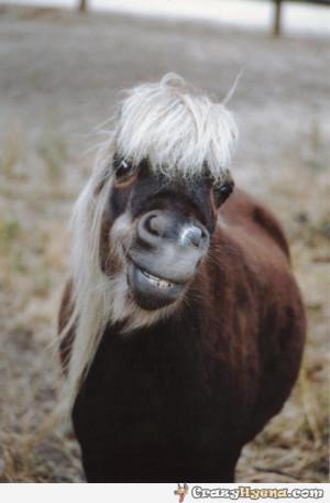 Do I Look Like Cute   Horse Cute & Funny Images 2013