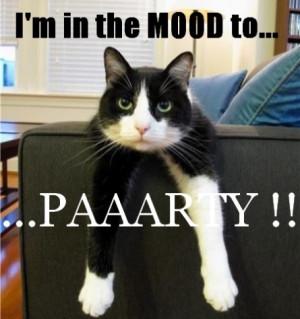 Funny Moody Cat