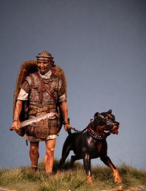 Roman War Dogs