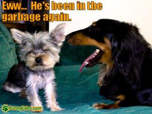 via: funnyfidos.com