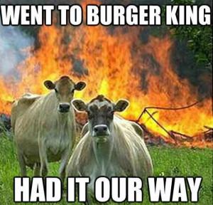 Funny Vegan Pic
