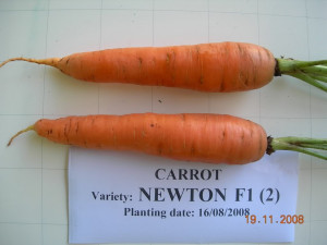 Funny Carrot Pictures...