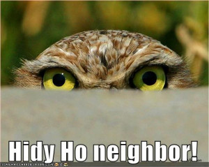 funny-pictures-owl-eyes-fence1.jpg#owl%20funny%20%20499x399