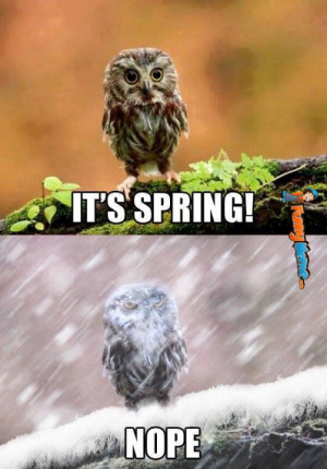 Funny memes – It's spring.. Nope.